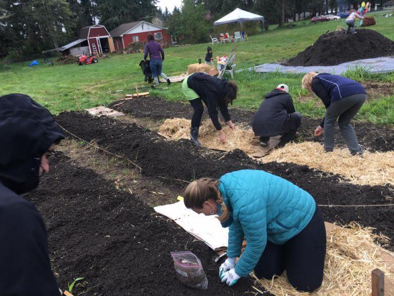 Spring 2019. Planting 200 strawberries